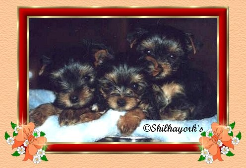 pide la foto Cachorros3